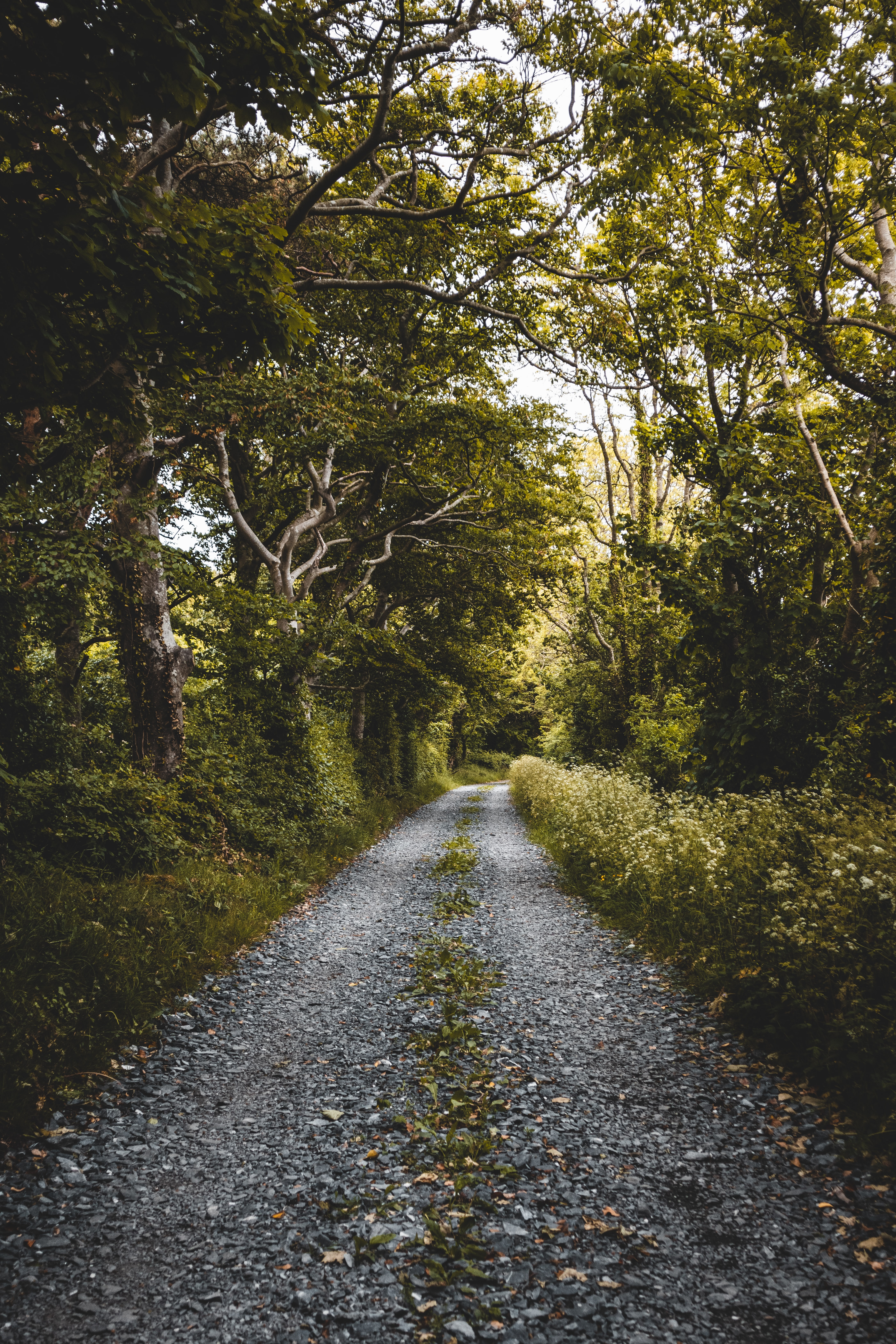 131969 download wallpaper Plants, Nature, Trees, Road, Forest screensavers and pictures for free