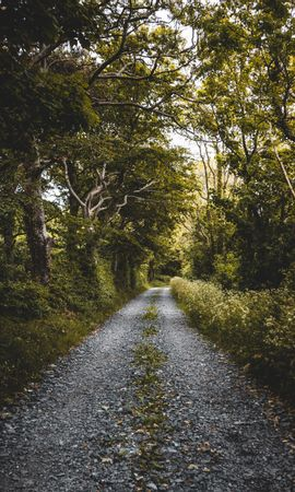 131969 download wallpaper Nature, Road, Forest, Trees, Plants screensavers and pictures for free