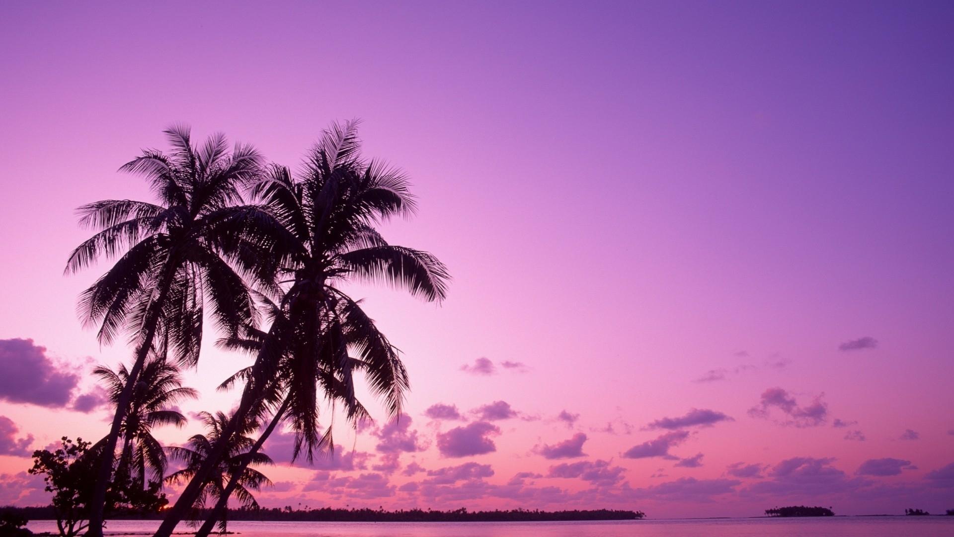 46120 скачать Фиолетовые обои на телефон бесплатно, Пейзаж, Природа, Пальмы Фиолетовые картинки и заставки на мобильный