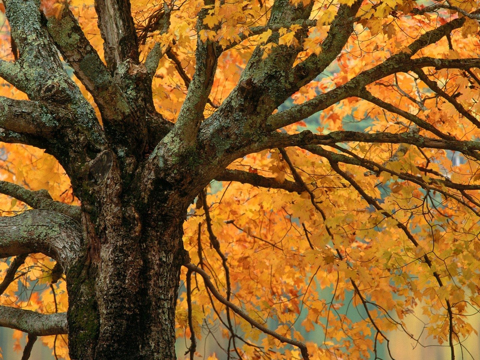 6900 скачать обои Растения, Деревья, Осень - заставки и картинки бесплатно
