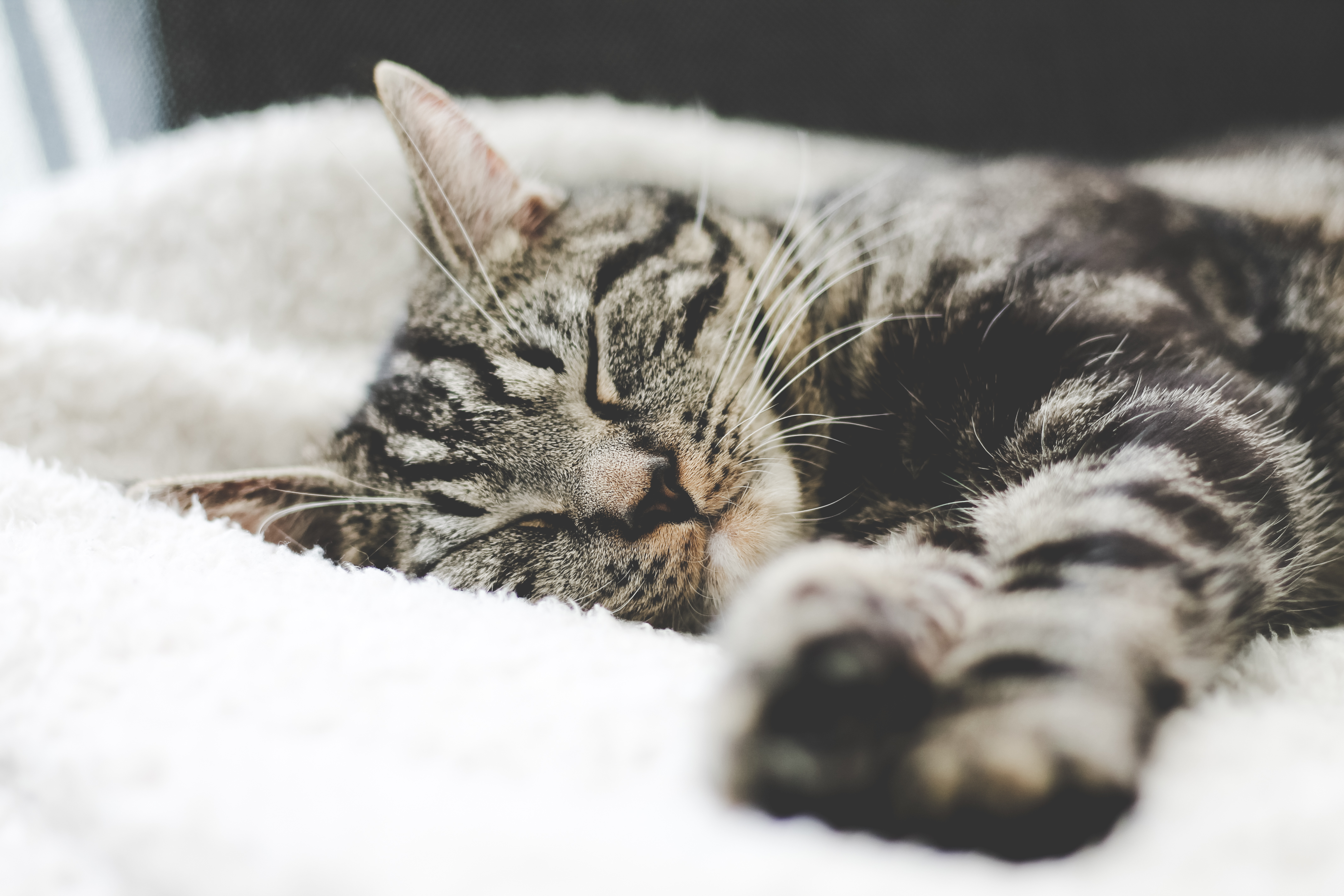 148697 download wallpaper Animals, Cat, Muzzle, Striped, Lies screensavers and pictures for free