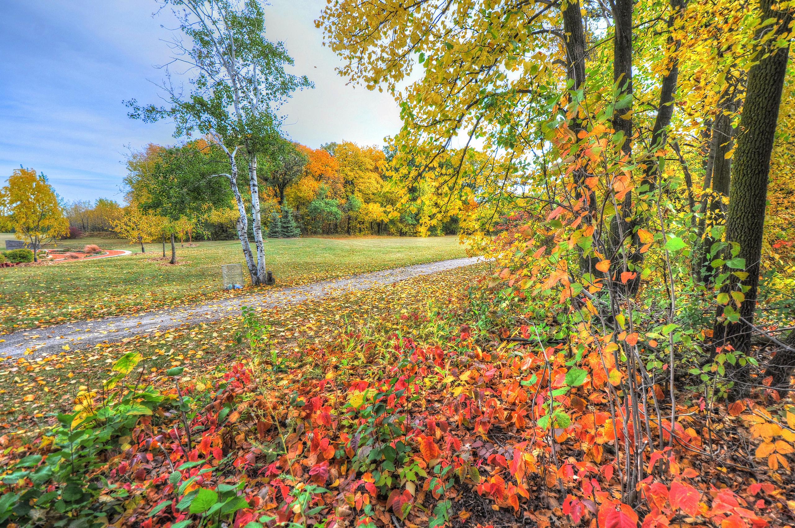 128853 завантажити шпалери Природа, Осінь, Дерева, Стежка, Шлях, Ліс - заставки і картинки безкоштовно