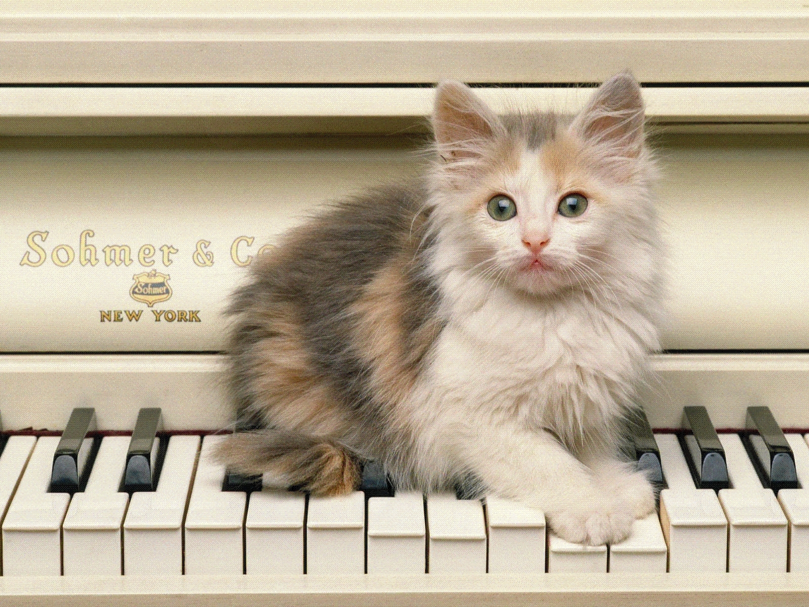 5495 download wallpaper Animals, Cats screensavers and pictures for free