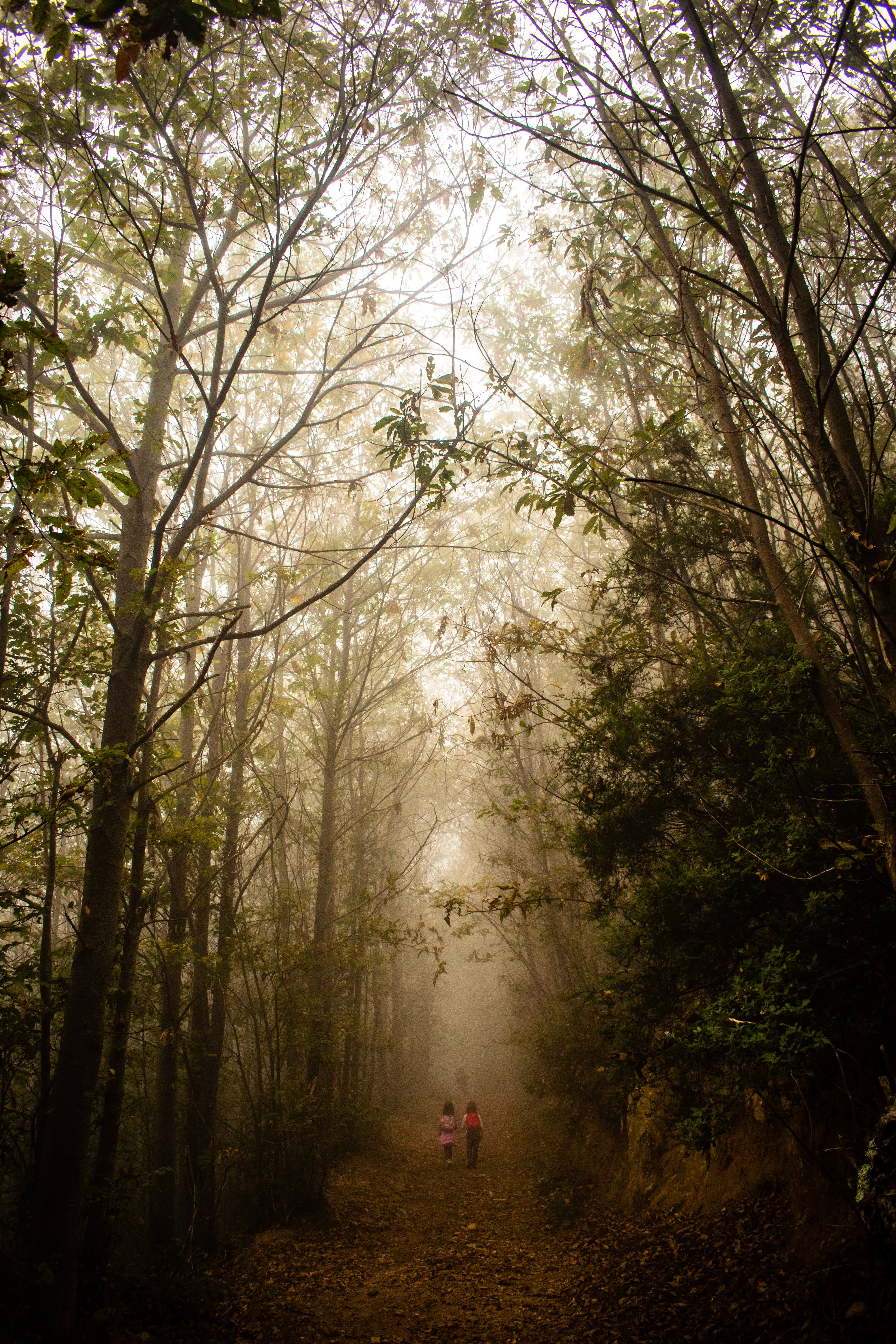 129509 download wallpaper Nature, Children, Forest, Fog, Path, Stroll screensavers and pictures for free