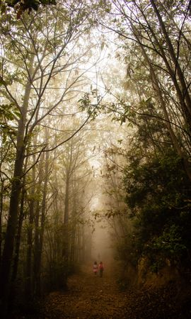 129509 Заставки и Обои Дети на телефон. Скачать Природа, Туман, Лес, Тропинка, Дети, Прогулка картинки бесплатно