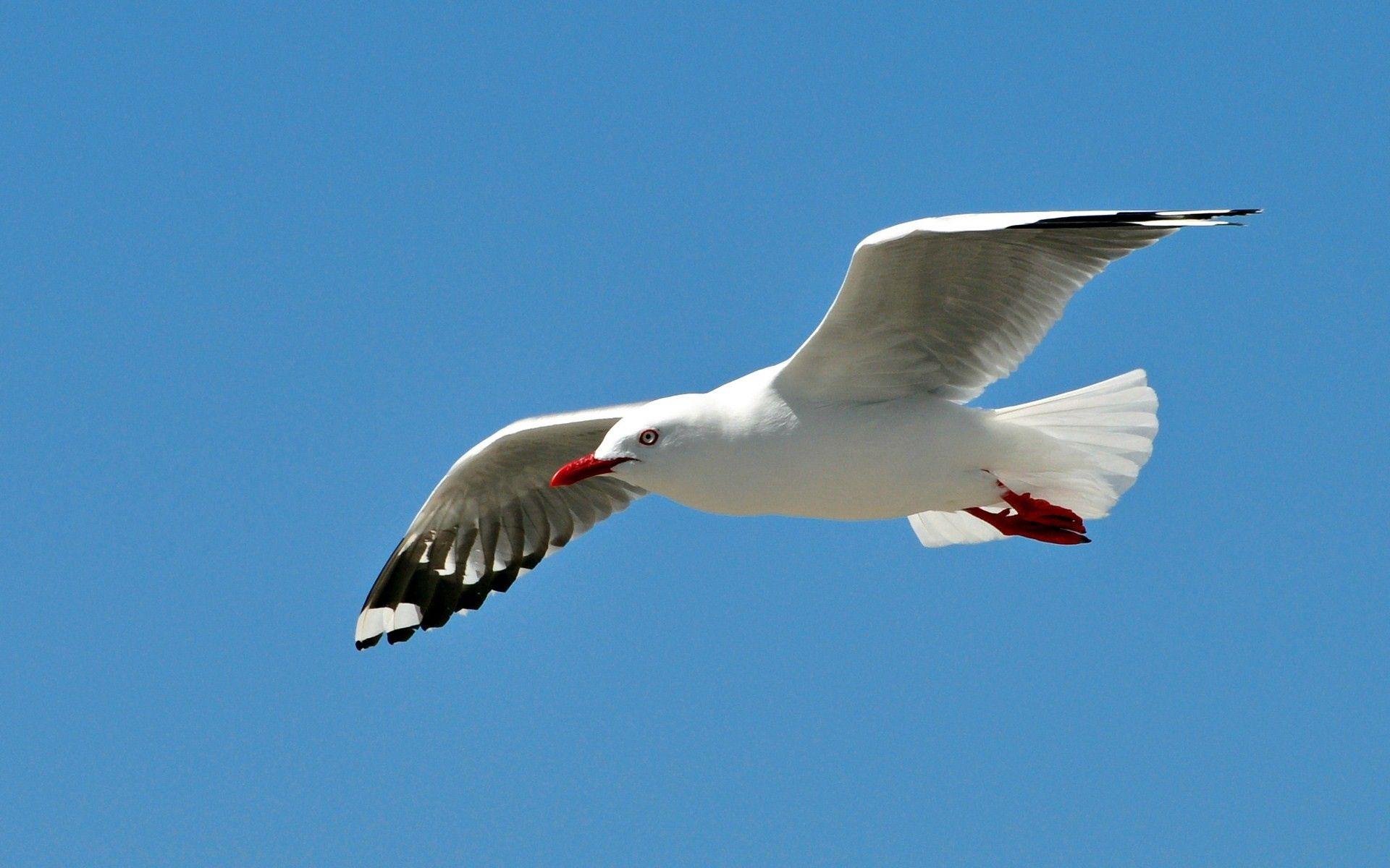 138999 download wallpaper Animals, Gull, Seagull, Bird, Sky, Sweep, Wave, Flight screensavers and pictures for free