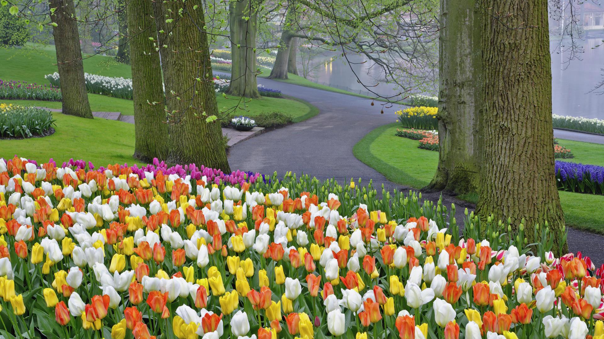 18253 скачать обои Растения, Пейзаж, Цветы, Тюльпаны - заставки и картинки бесплатно