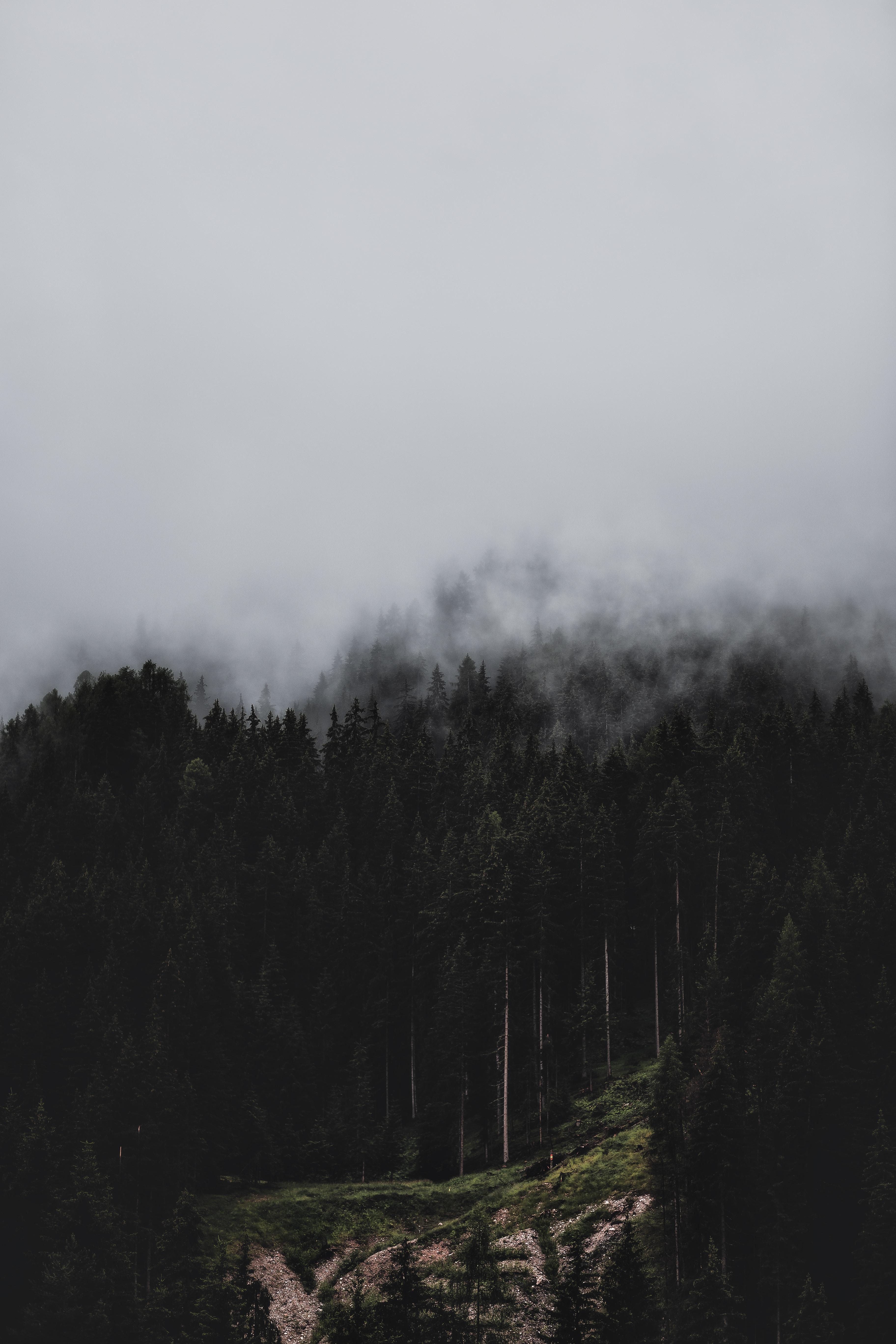84760 скачать обои Лес, Туман, Природа, Деревья, Сосны - заставки и картинки бесплатно