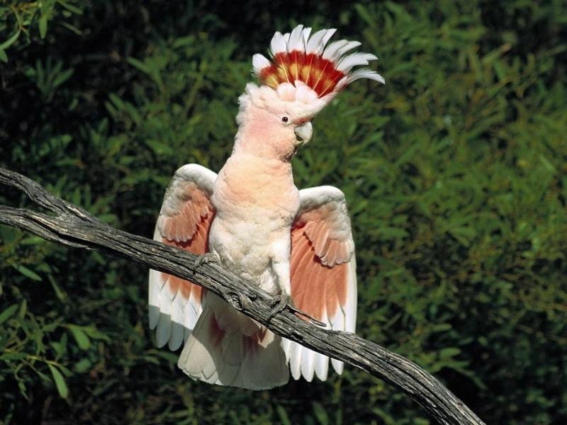 Baixar papel de parede para celular de Papagaios, Animais, Aves gratuito.