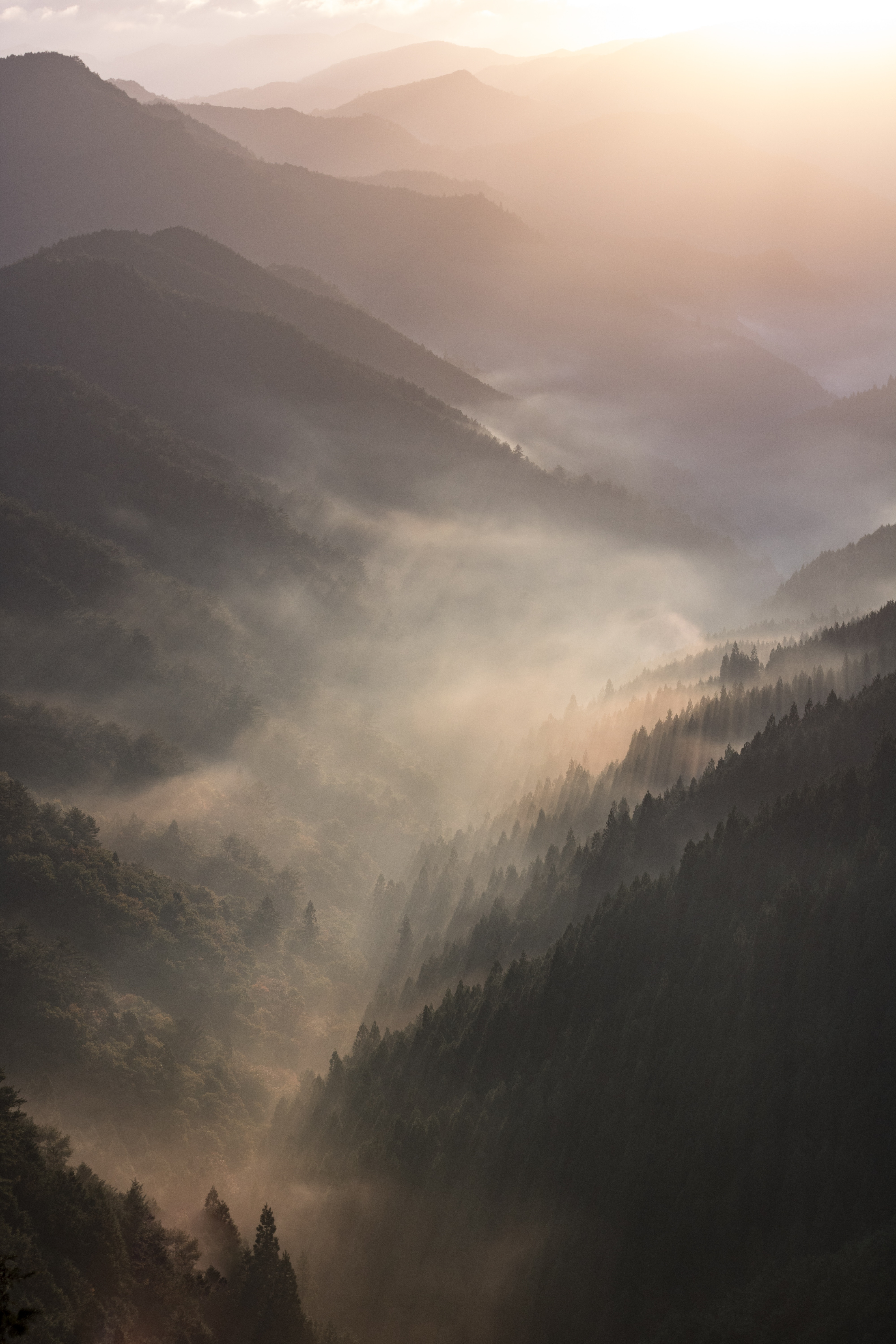 52997 download wallpaper Nature, Fog, Dawn, Forest, Mountains, Landscape screensavers and pictures for free