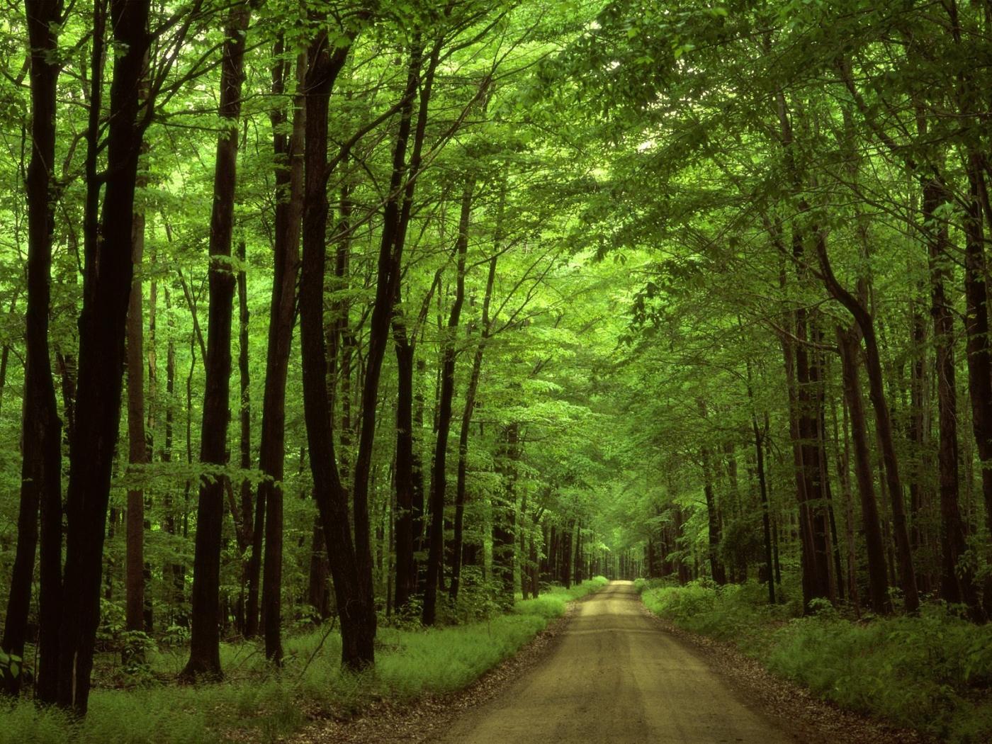 37612 скачать обои Пейзаж, Деревья, Дороги - заставки и картинки бесплатно