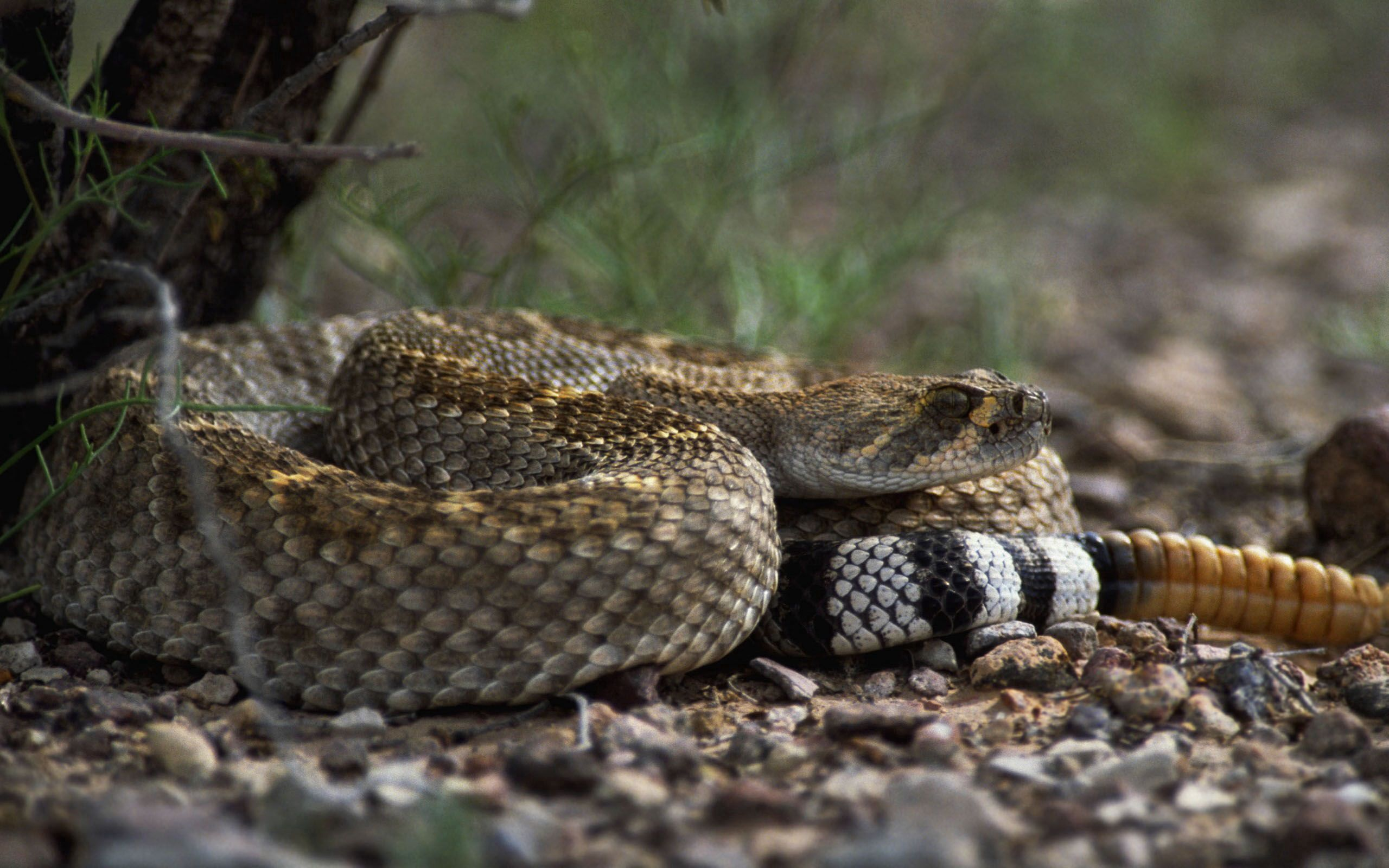 112026 download wallpaper Animals, Stones, Snake, Color, Sight, Opinion screensavers and pictures for free