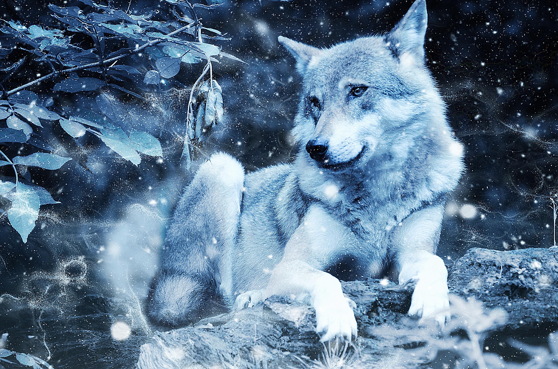 84331 Hintergrundbild herunterladen Tiere, Raubtier, Predator, Wolf, Wilde Natur, Wildlife, Photoshop - Bildschirmschoner und Bilder kostenlos