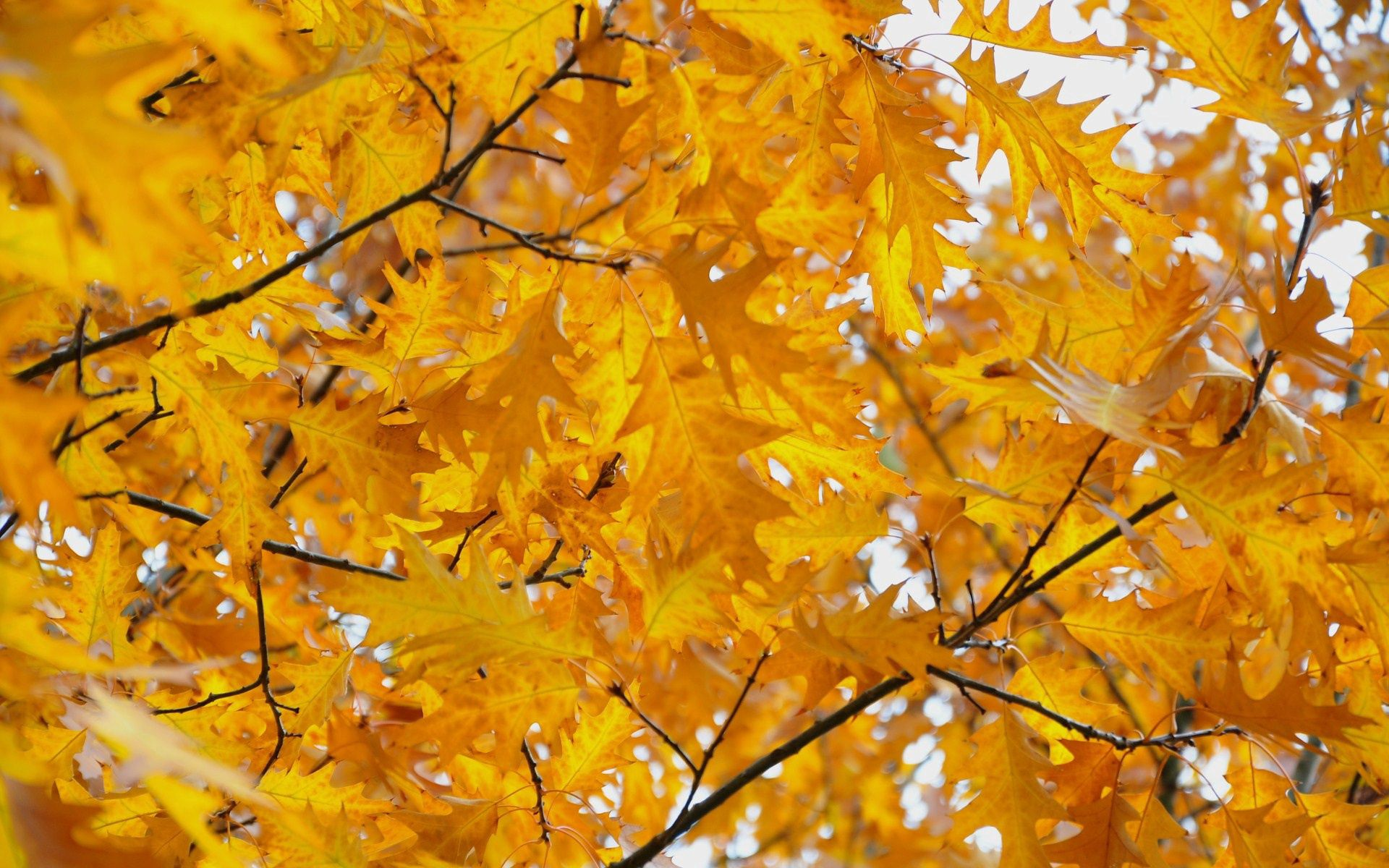 106342 скачать обои Природа, Листья, Ветки, Осень - заставки и картинки бесплатно
