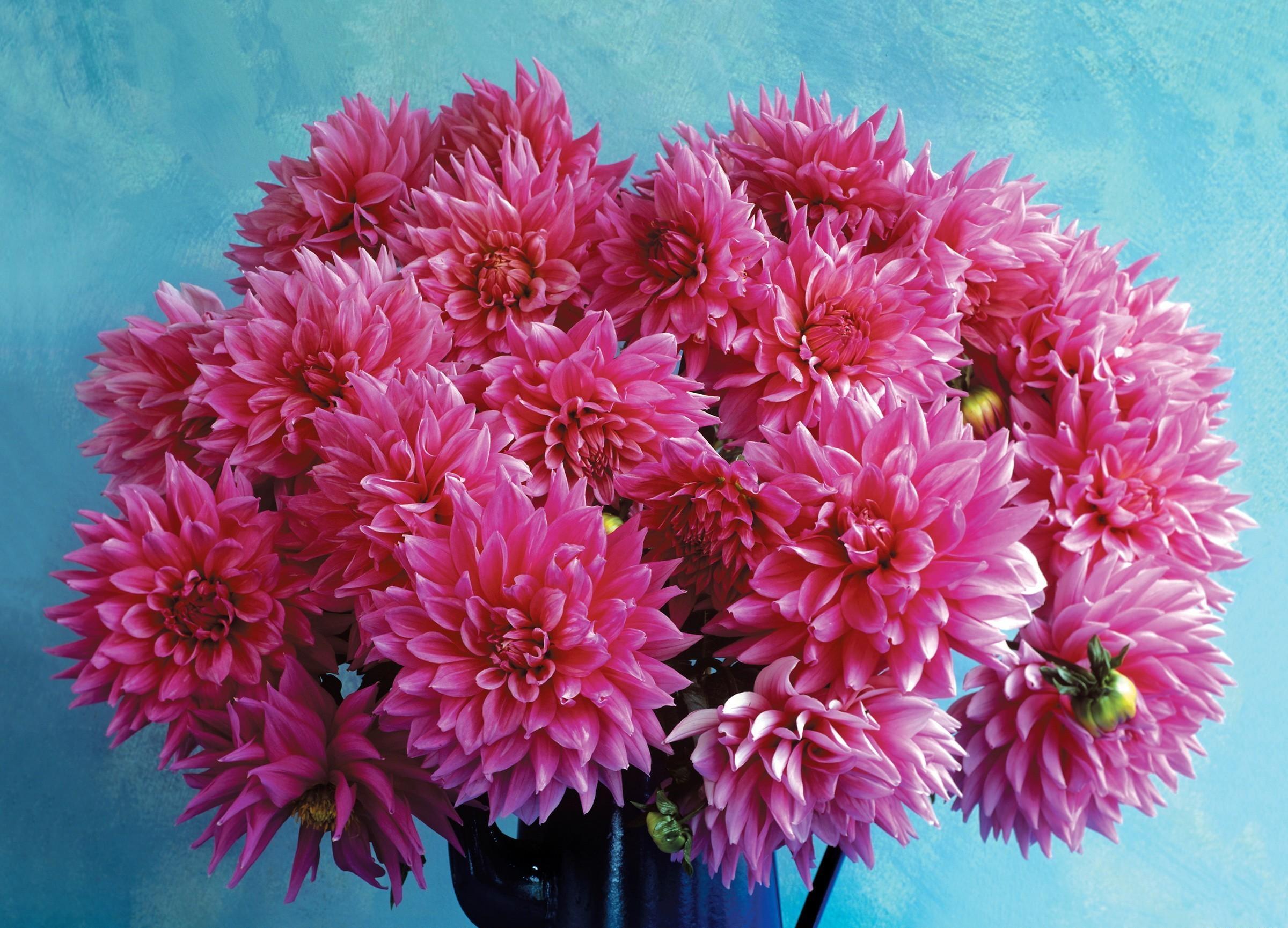 53230 завантажити шпалери Квіти, Жоржини, Букет, Глечик, Фон - заставки і картинки безкоштовно