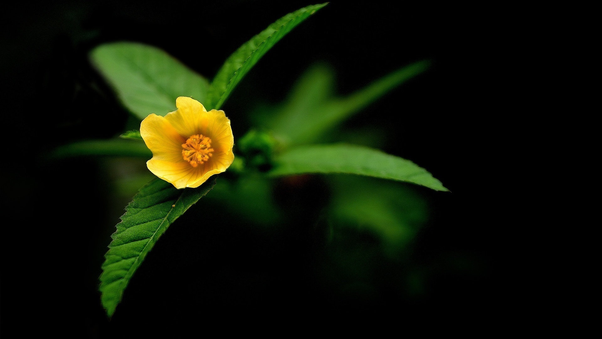 16095 descargar fondo de pantalla Plantas, Flores: protectores de pantalla e imágenes gratis