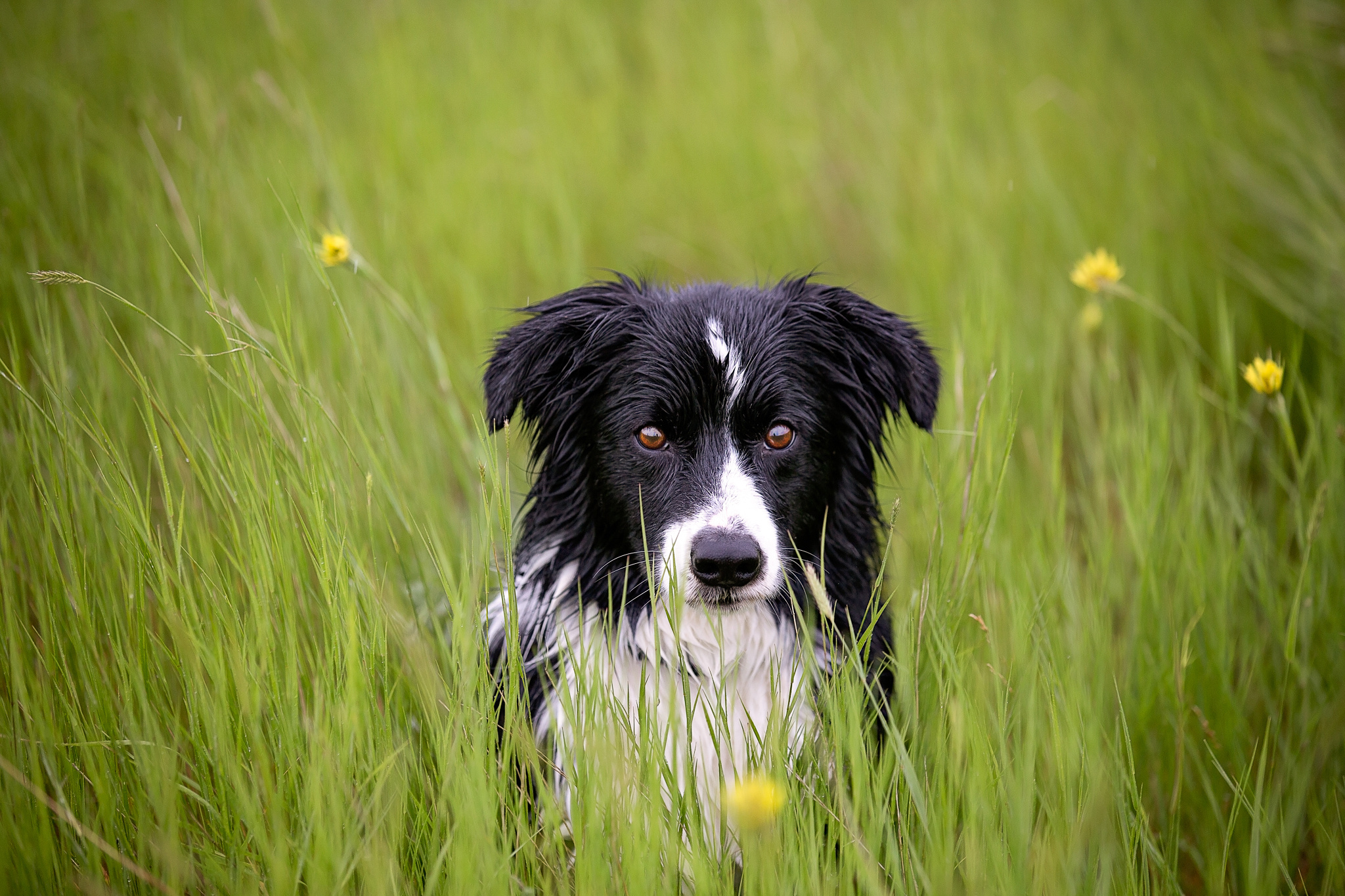 154274 download wallpaper Animals, Dog, Muzzle, Grass, Spotted, Spotty, Wet screensavers and pictures for free
