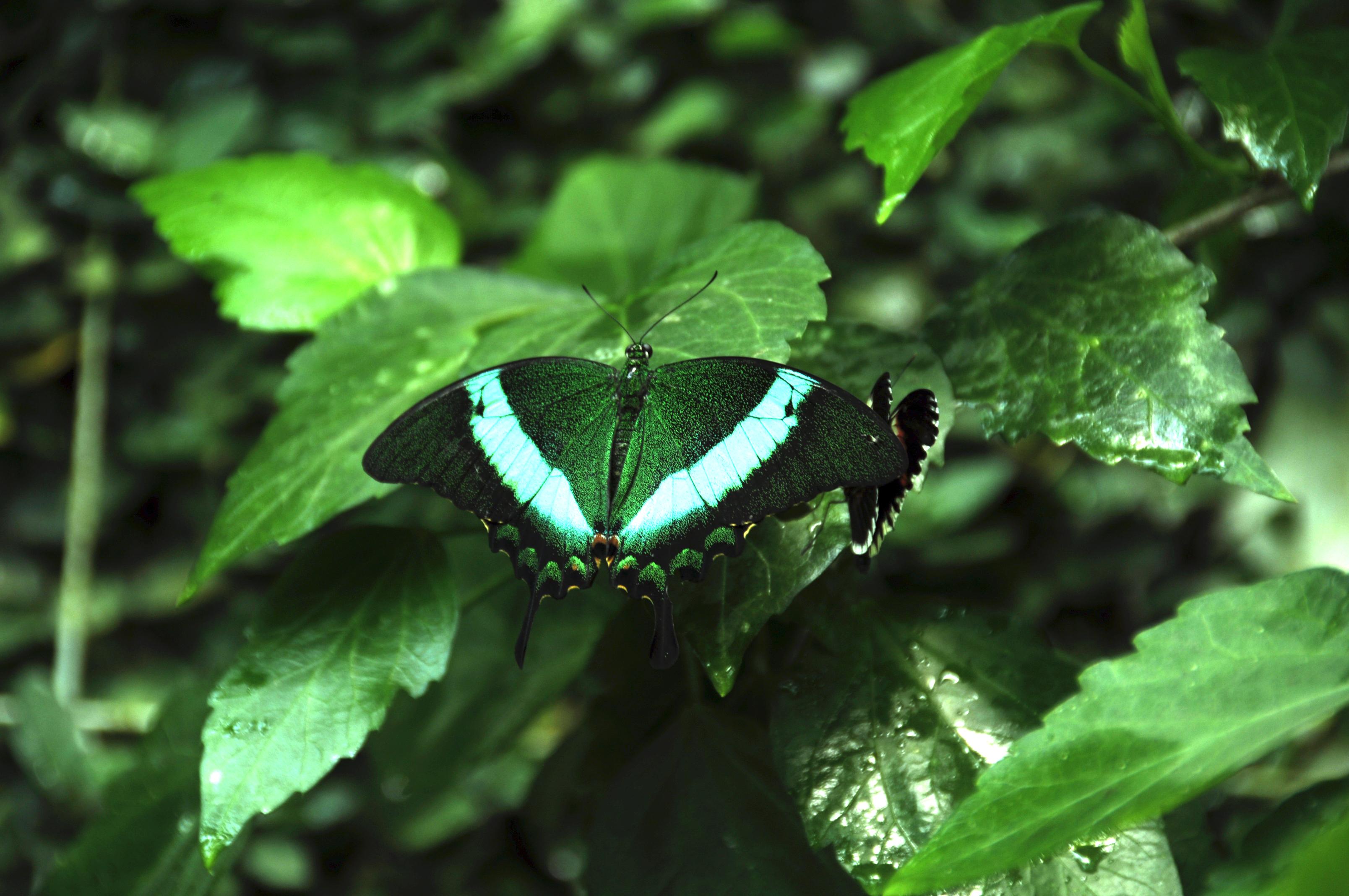 88024 скачать обои Животные, Тропическая Бабочка, Бабочка, Крылья, Узор, Растения, Зеленый - заставки и картинки бесплатно