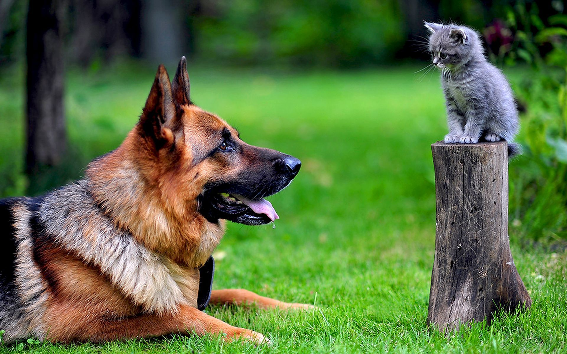 49273 download wallpaper Animals, Dogs screensavers and pictures for free