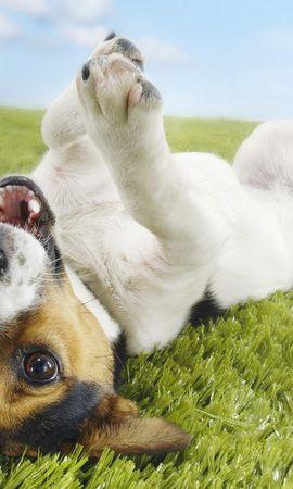 45991 baixar papel de parede Animais, Cães - protetores de tela e imagens gratuitamente