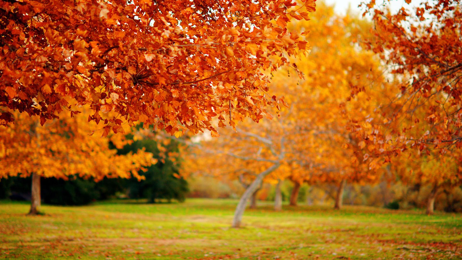 24461 скачать обои Пейзаж, Деревья, Осень, Листья - заставки и картинки бесплатно