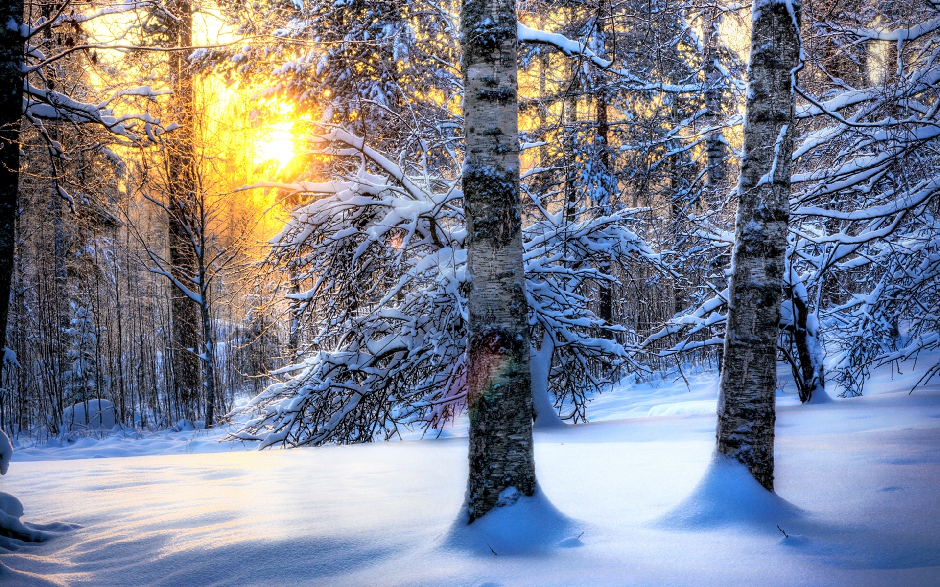 44624 download wallpaper Landscape, Winter, Nature, Trees, Snow screensavers and pictures for free