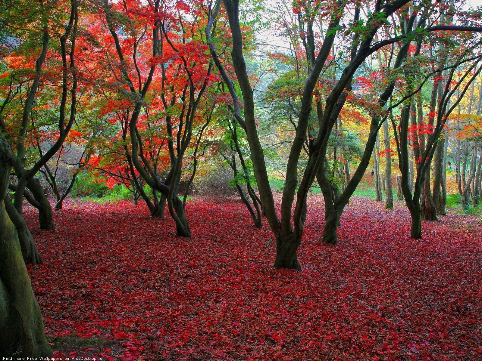 3525 скачать обои Пейзаж, Деревья, Осень, Листья - заставки и картинки бесплатно