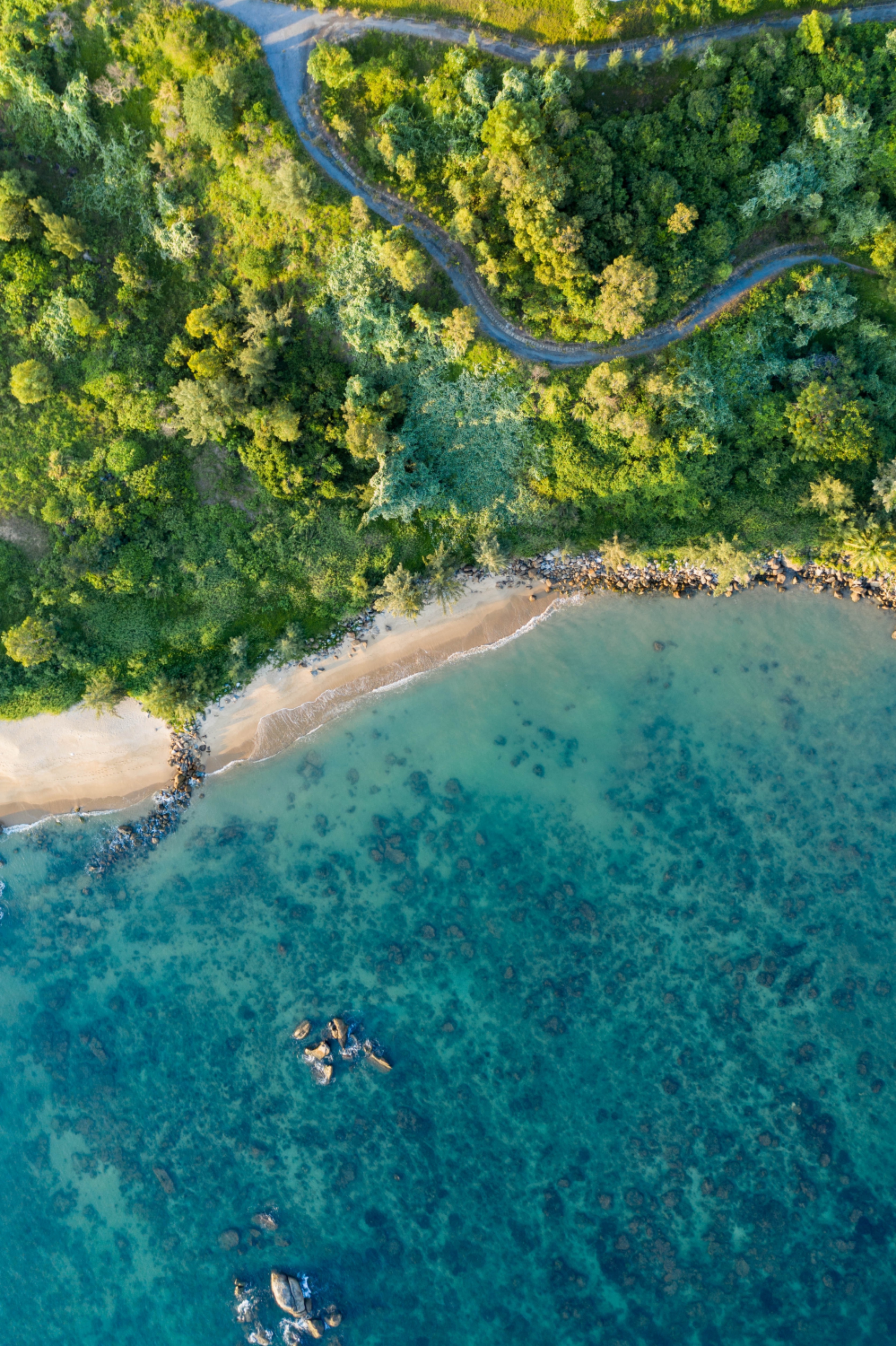 73230 download wallpaper View From Above, Trees, Nature, Sea, Beach, Coast, Vegetation screensavers and pictures for free