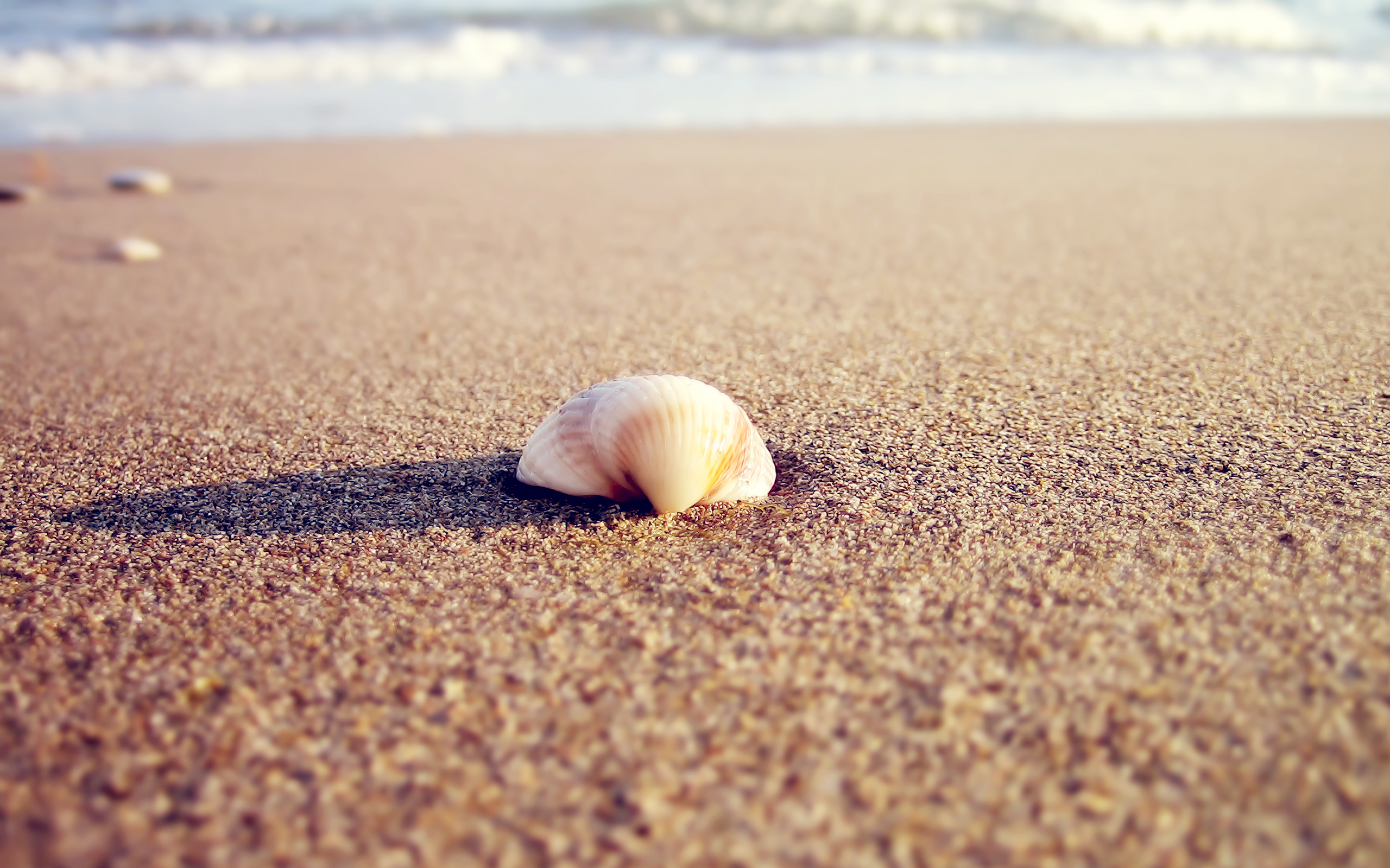 18504 скачать обои Пейзаж, Море, Пляж, Ракушки - заставки и картинки бесплатно