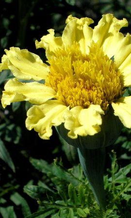 8834 скачать обои Растения, Цветы - заставки и картинки бесплатно