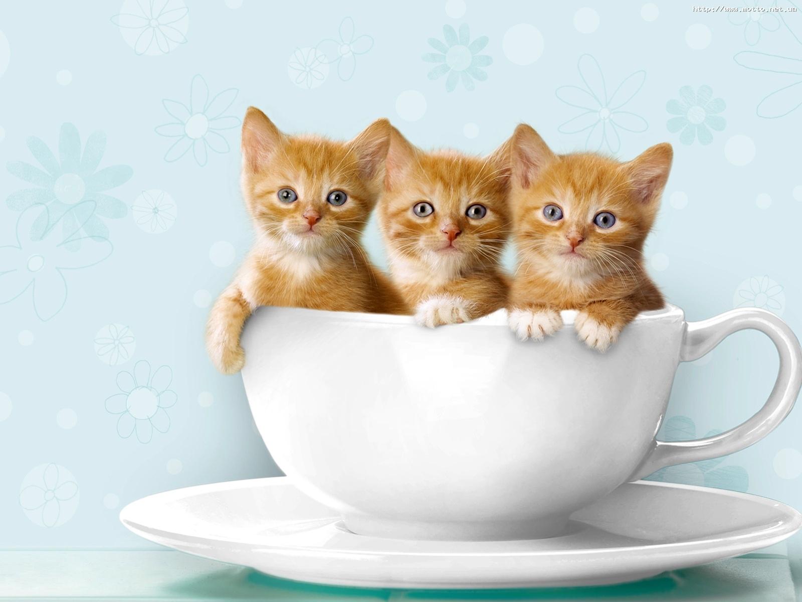 982 скачать обои Животные, Кошки (Коты, Котики) - заставки и картинки бесплатно