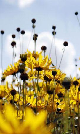 19453 скачать обои Растения, Цветы - заставки и картинки бесплатно