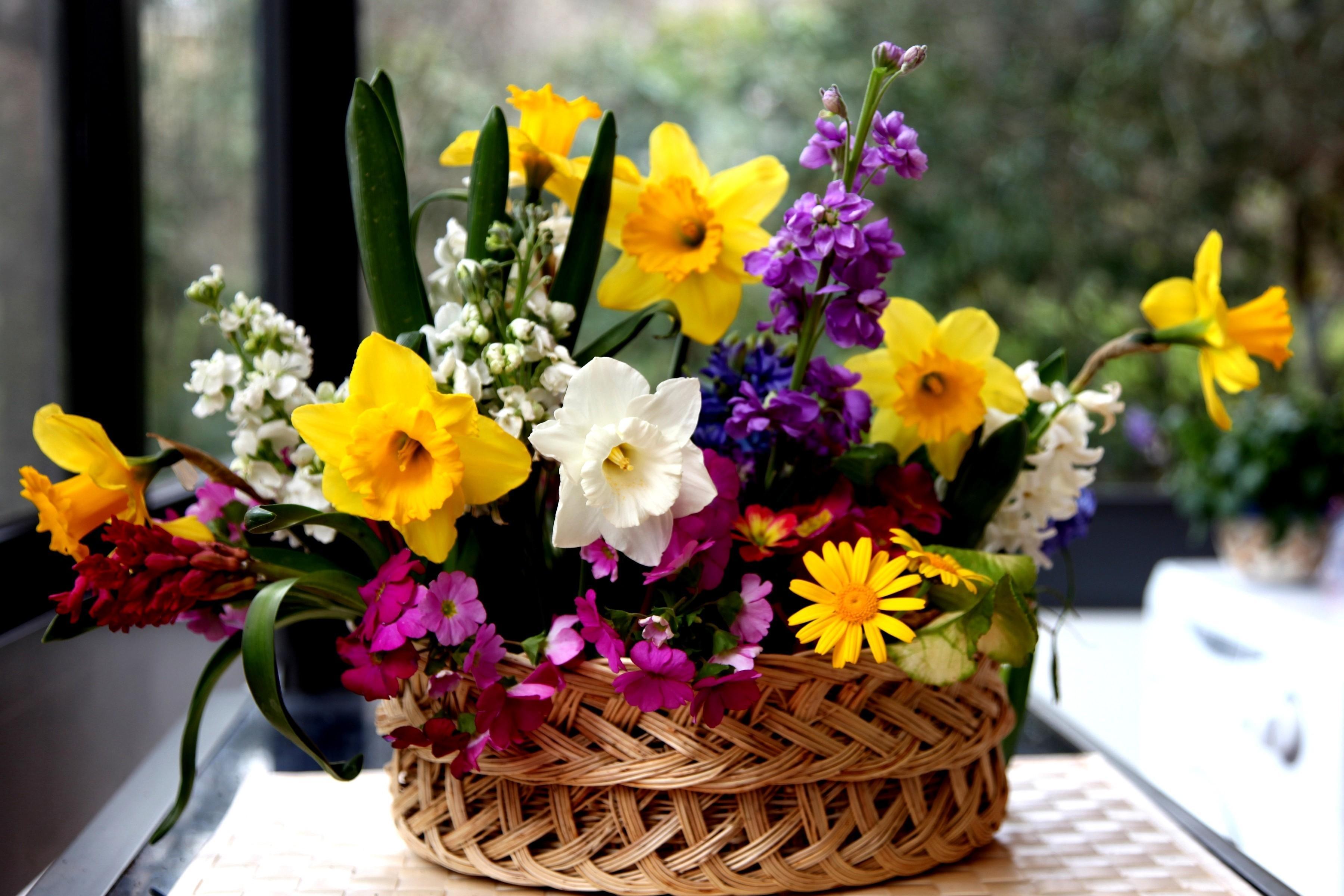 154498 Заставки и Обои Нарциссы на телефон. Скачать Цветы, Нарциссы, Корзина, Композиция, Разные картинки бесплатно