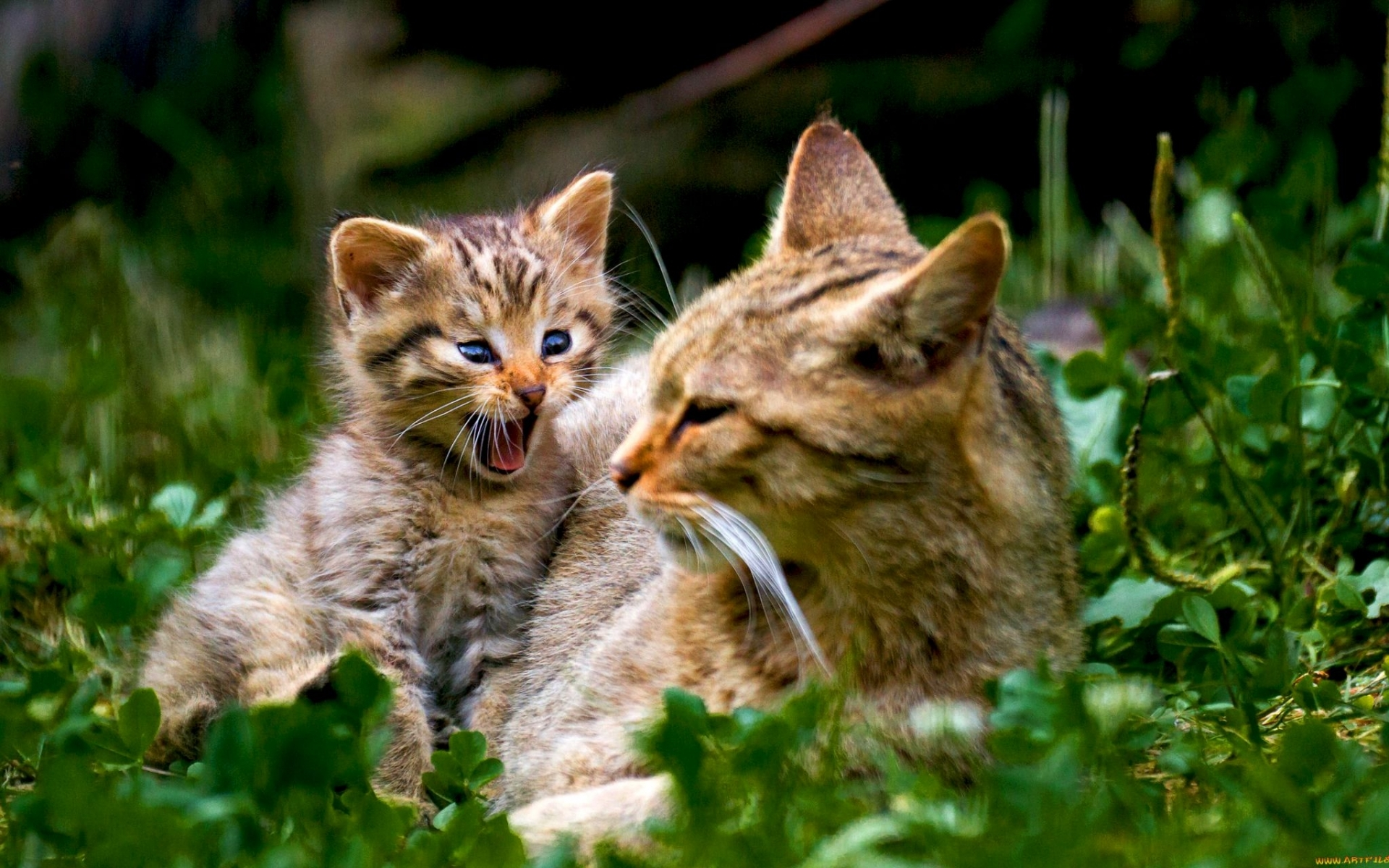 48387 download wallpaper Animals, Cats screensavers and pictures for free