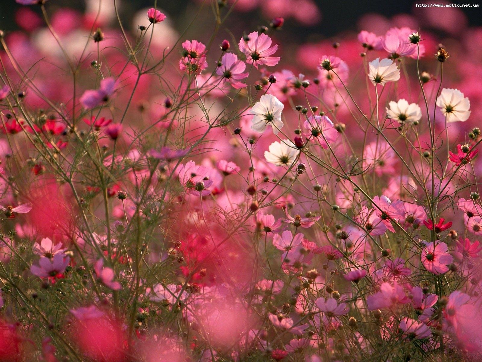 7022 Hintergrundbild herunterladen Pflanzen, Blumen, Hintergrund - Bildschirmschoner und Bilder kostenlos