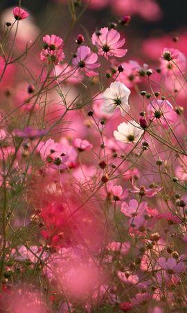 7022 скачать обои Растения, Цветы, Фон - заставки и картинки бесплатно