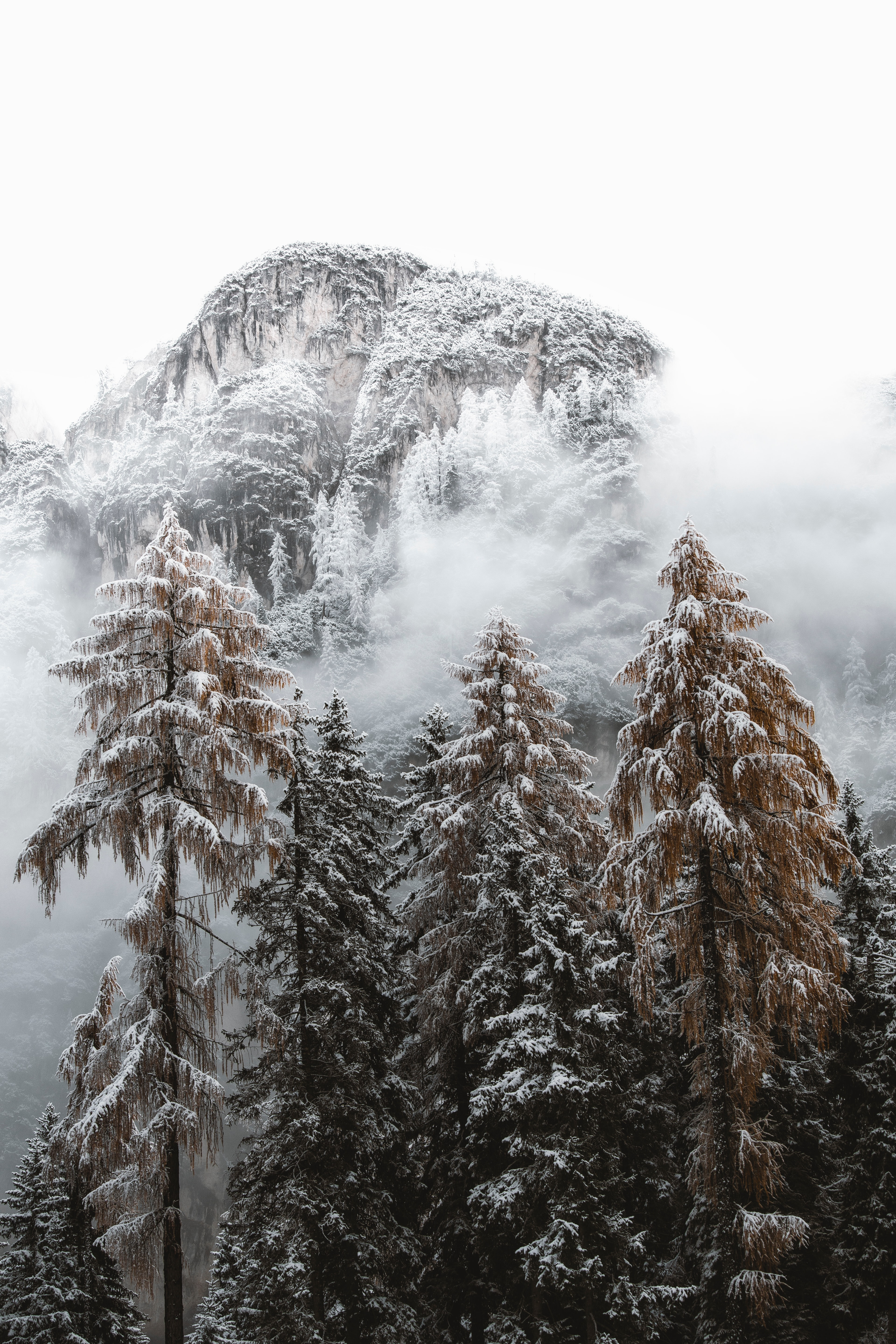 100744 download wallpaper Nature, Spruce, Fir, Snow, Snow Covered, Snowbound, Trees, Mountains screensavers and pictures for free