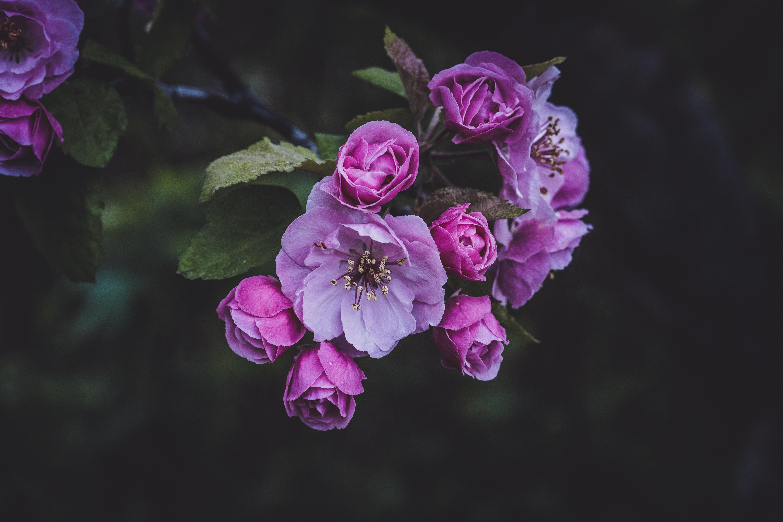 154249 скачать обои Цветы, Розовый, Весна, Цветение - заставки и картинки бесплатно