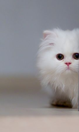 18736 download wallpaper Animals, Cats screensavers and pictures for free