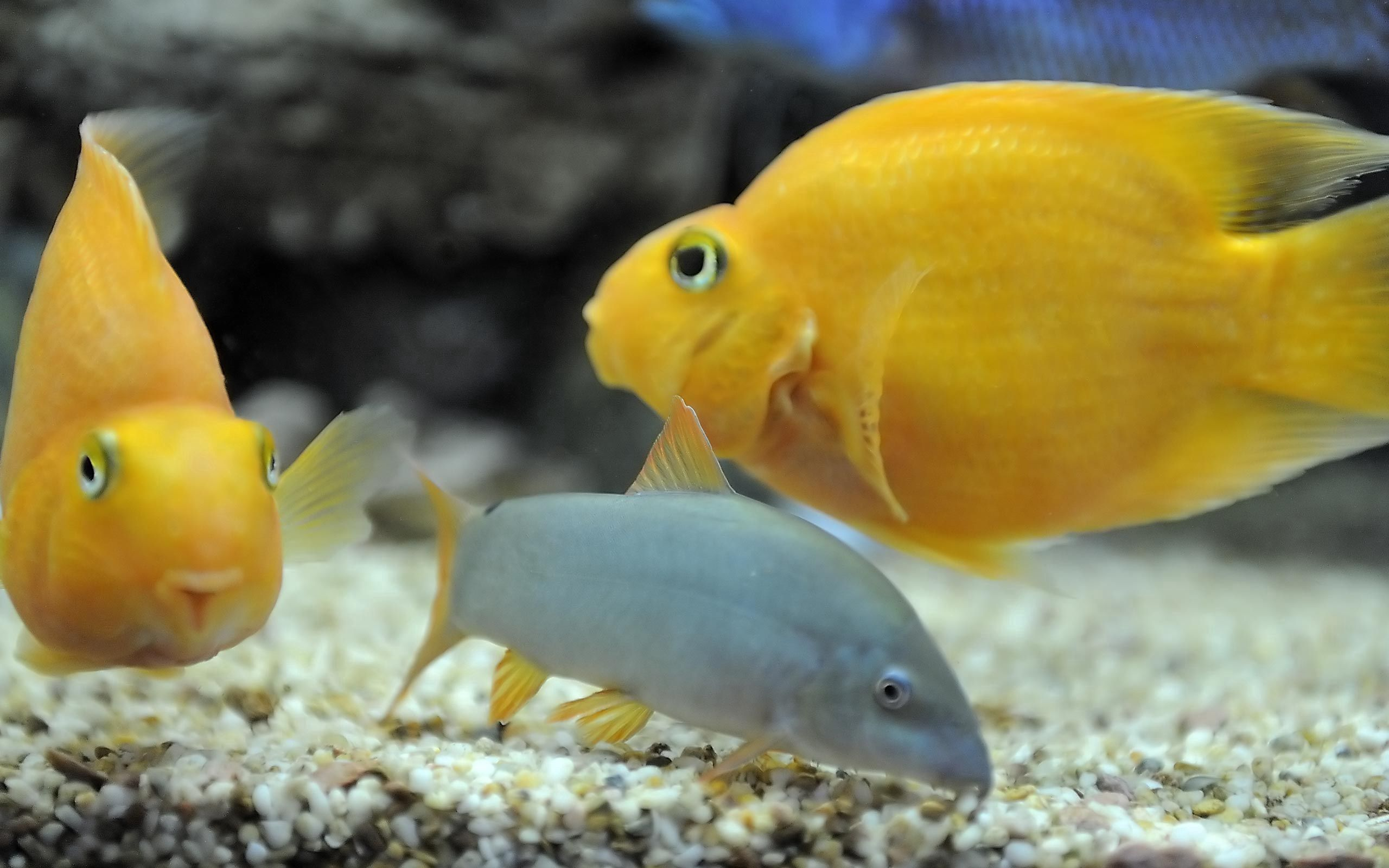 99334 download wallpaper Animals, To Swim, Swim, Underwater World, Fishes screensavers and pictures for free
