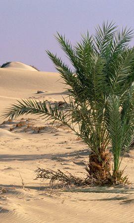 22898 скачать обои Растения, Пейзаж, Песок, Пальмы, Пустыня - заставки и картинки бесплатно