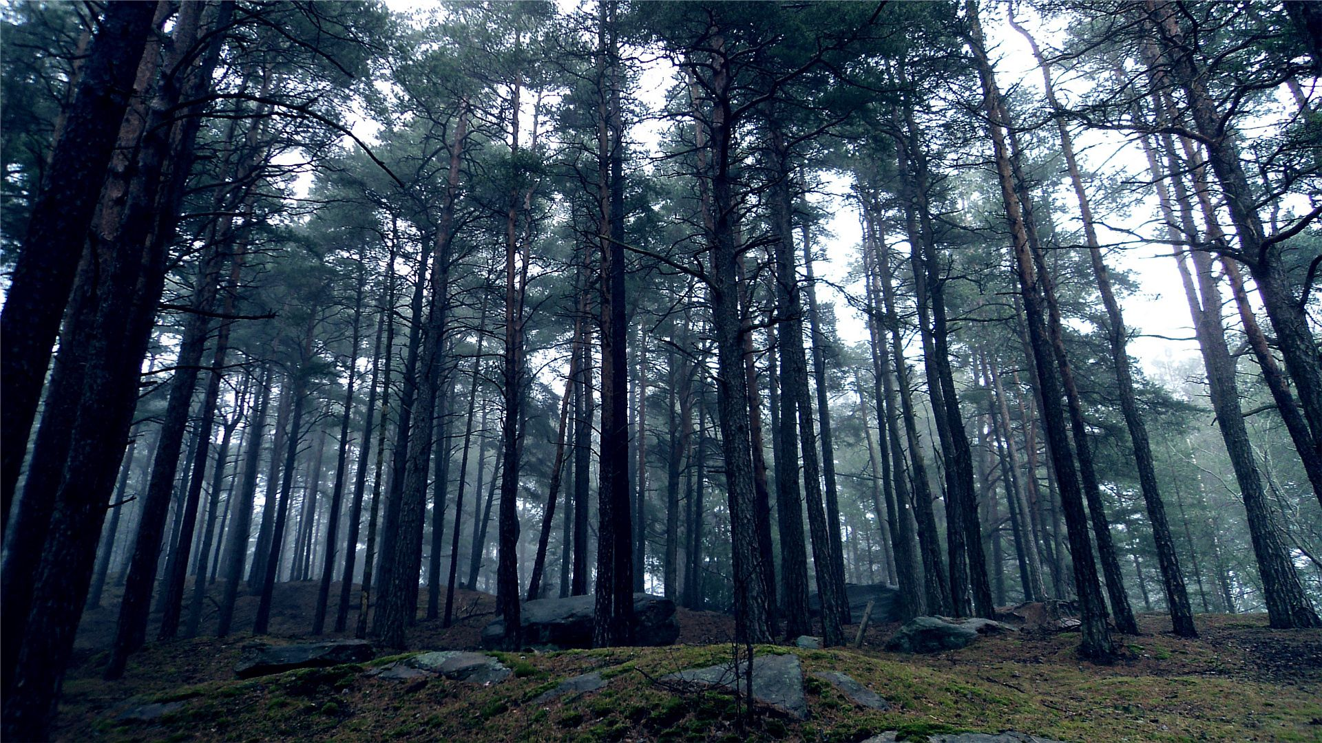70922 download wallpaper Nature, Trees, Stones, Forest, Crown, Land, Earth, Gloomy, Crowns screensavers and pictures for free