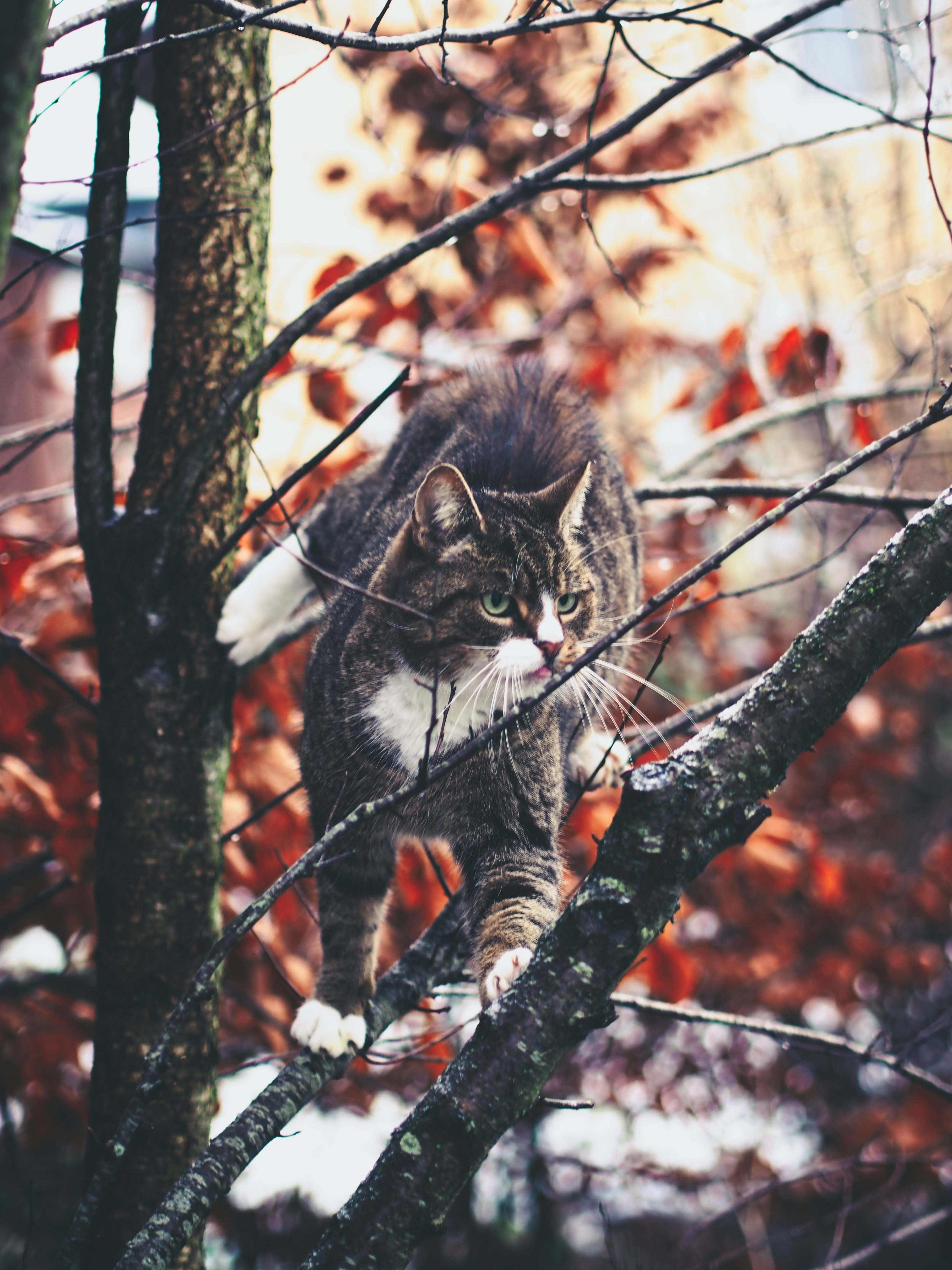 91615 download wallpaper Animals, Cat, Branches, Climb, Curiosity, Stroll screensavers and pictures for free