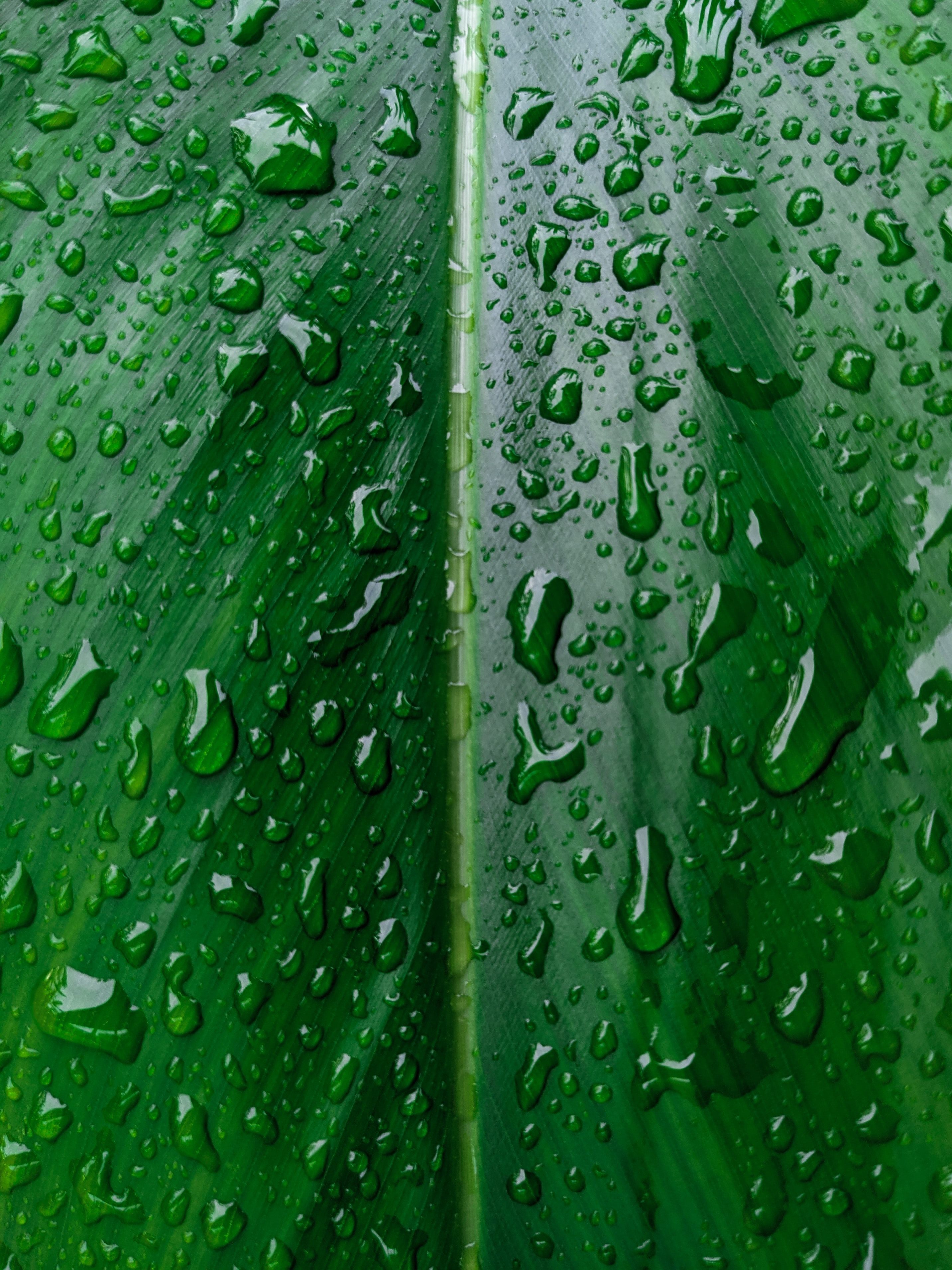 133835 download wallpaper Macro, Sheet, Leaf, Drops, Wet, Water screensavers and pictures for free