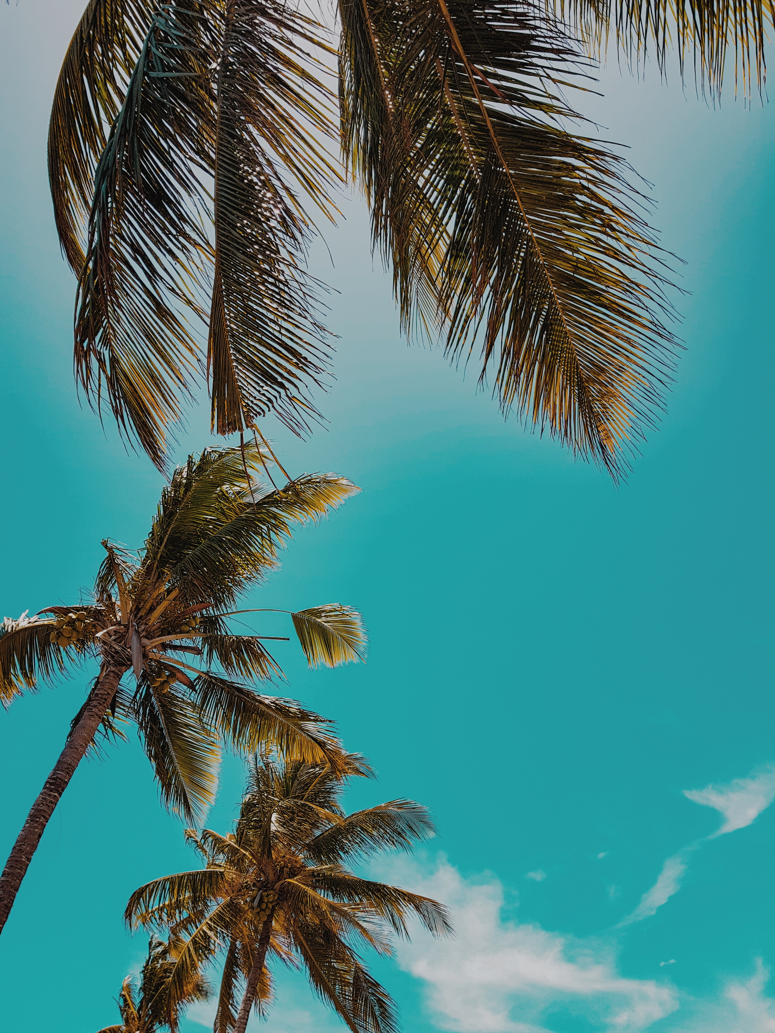 145554 download wallpaper Nature, Tops, Top, Sky, Tropics, Summer, Palms screensavers and pictures for free