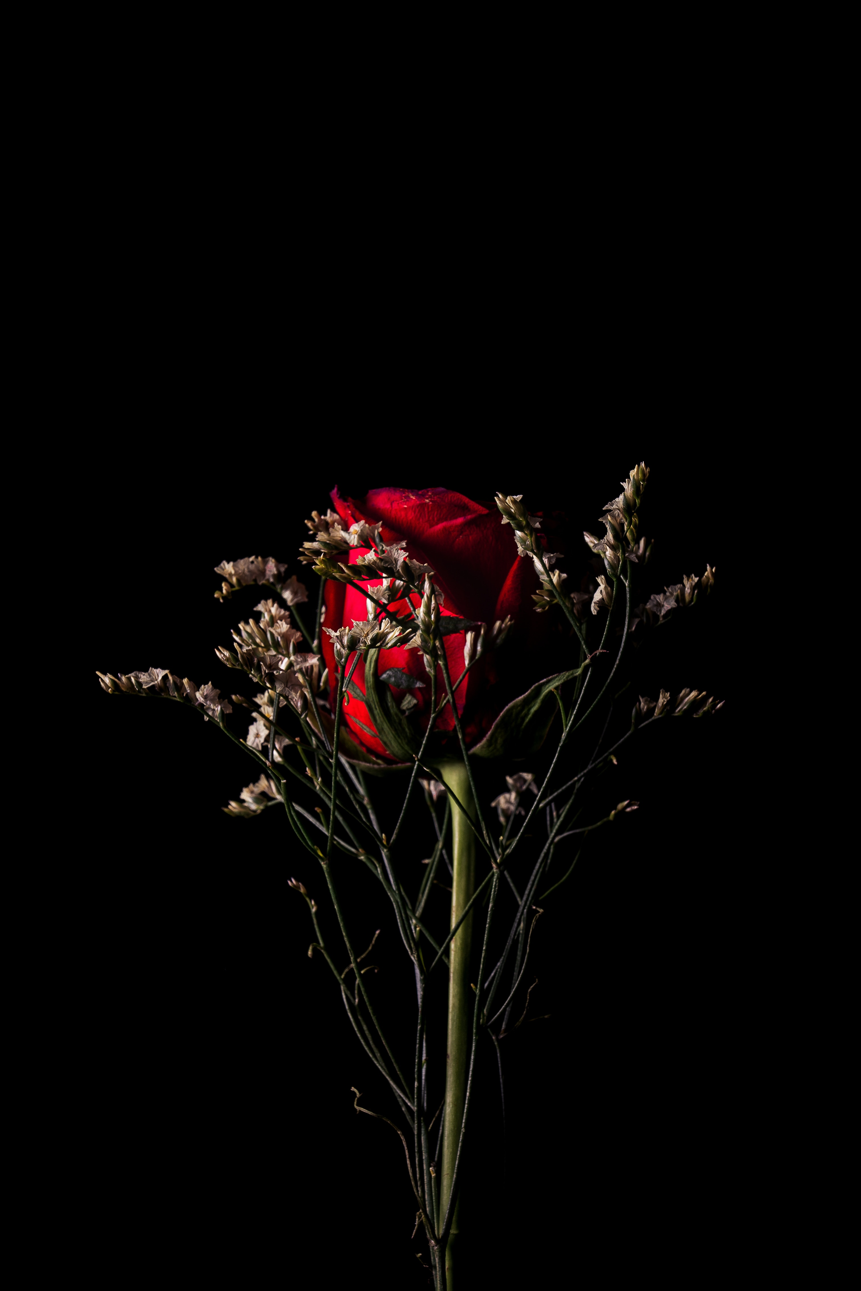 67346 download wallpaper Flowers, Flower, Dark, Rose Flower, Rose, Bouquet screensavers and pictures for free