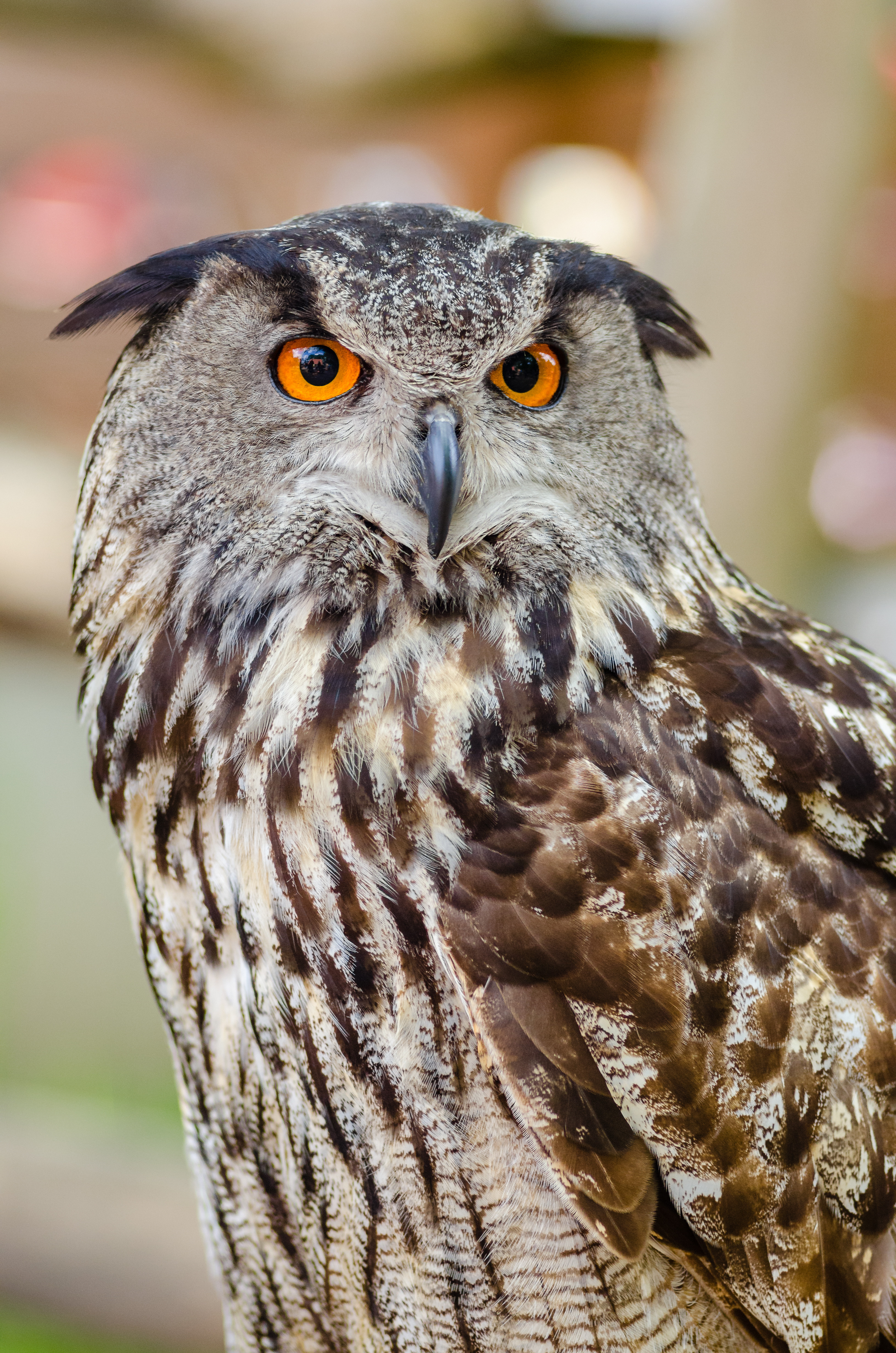 100340 download wallpaper Animals, Eurasian Eagle Owl, Eurasian Owl, Owl, Eagle Owl, Bird, Predator screensavers and pictures for free
