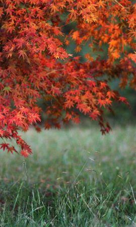 40812 скачать обои Пейзаж, Деревья - заставки и картинки бесплатно