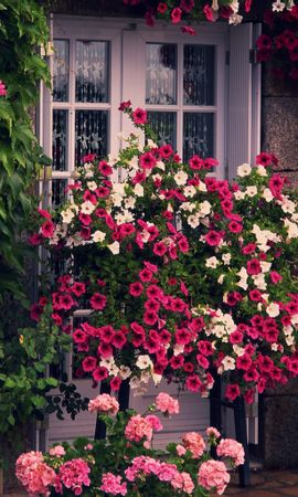 14379 скачать обои Растения, Цветы - заставки и картинки бесплатно