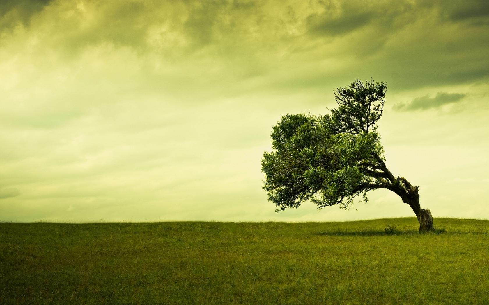 23654 скачать обои Пейзаж, Деревья, Поля, Облака - заставки и картинки бесплатно